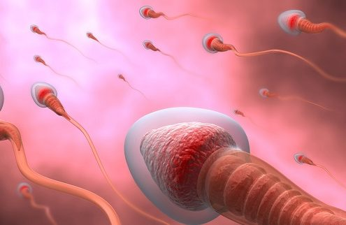 Natural insemination